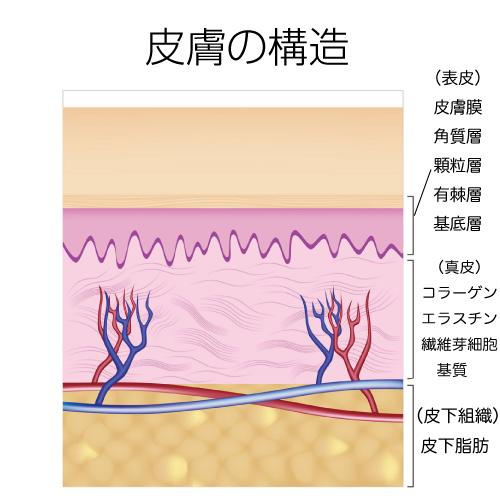 skin-2 - image