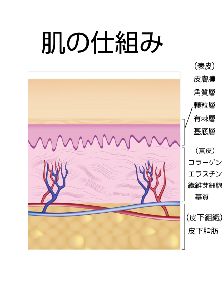 skin-4 - image