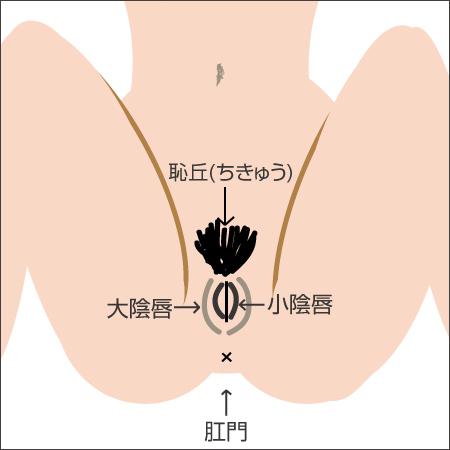 vulva1 - image